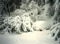 snowshoe-superstorm